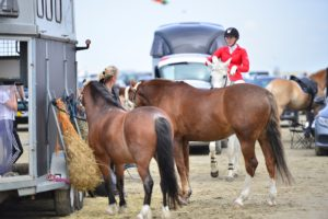 Read more about the article Tinglev Rideklub har været i DKsyd
